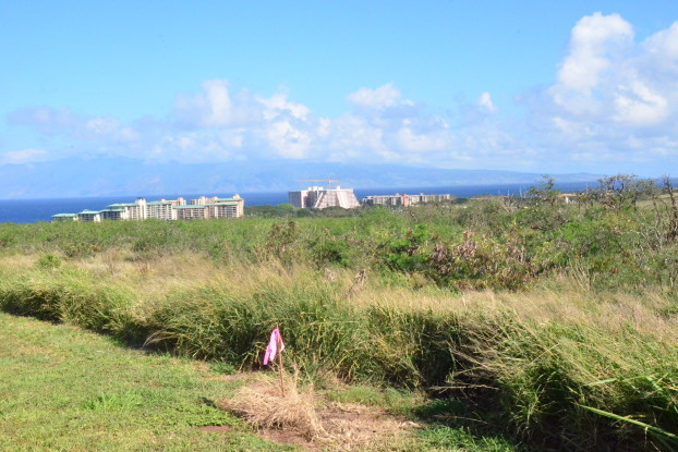 Site of West Maui hospital